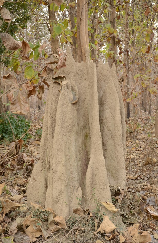Termite Hill at Corbett National Park