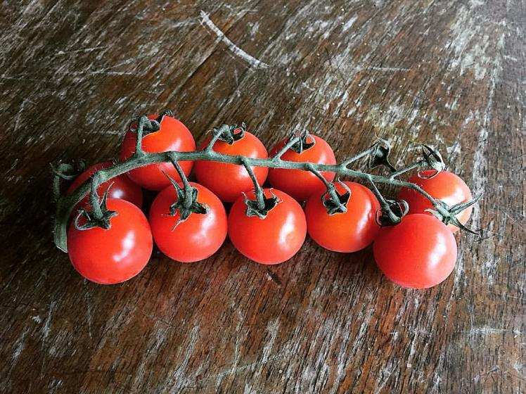 the-juiciest-and-sweetest-baby-tomatoes-ever-_27703886495_o