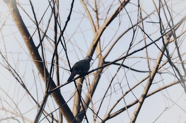 Bird Spotting at Corbett