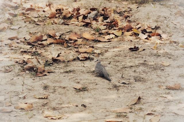 Birding Around in Corbett