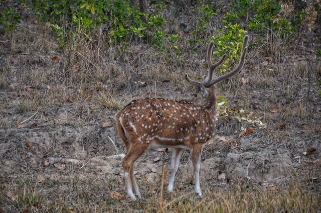 Corbett National Park - Deer