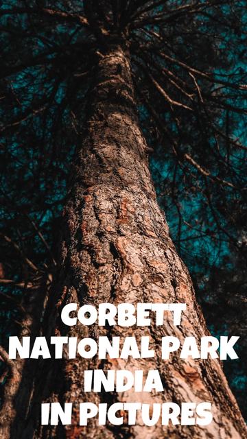 Corbett National Park, India - In Pictures #Nature #India #Corbett