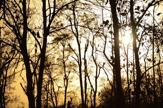 Glorious Sunset at Corbett.JPG