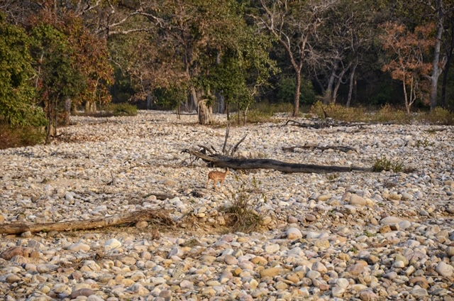 The dry riverbed at Corbett