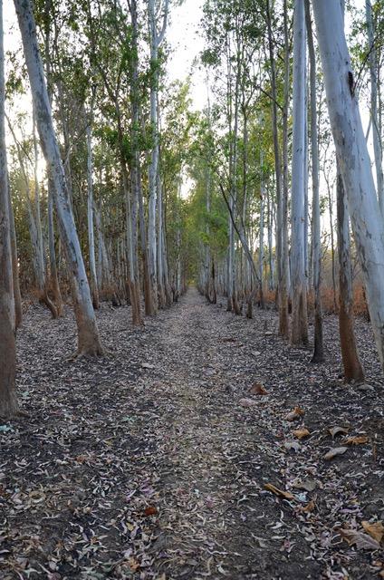 Walkways and Pathways - Corbett National Park