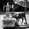 zermatt-fountain