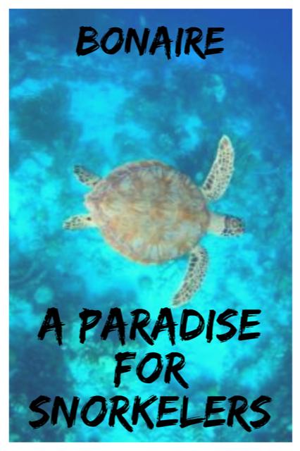Bonaire - Snorkeling in Paradise #Island #Travel #Caribbean #Bonaire