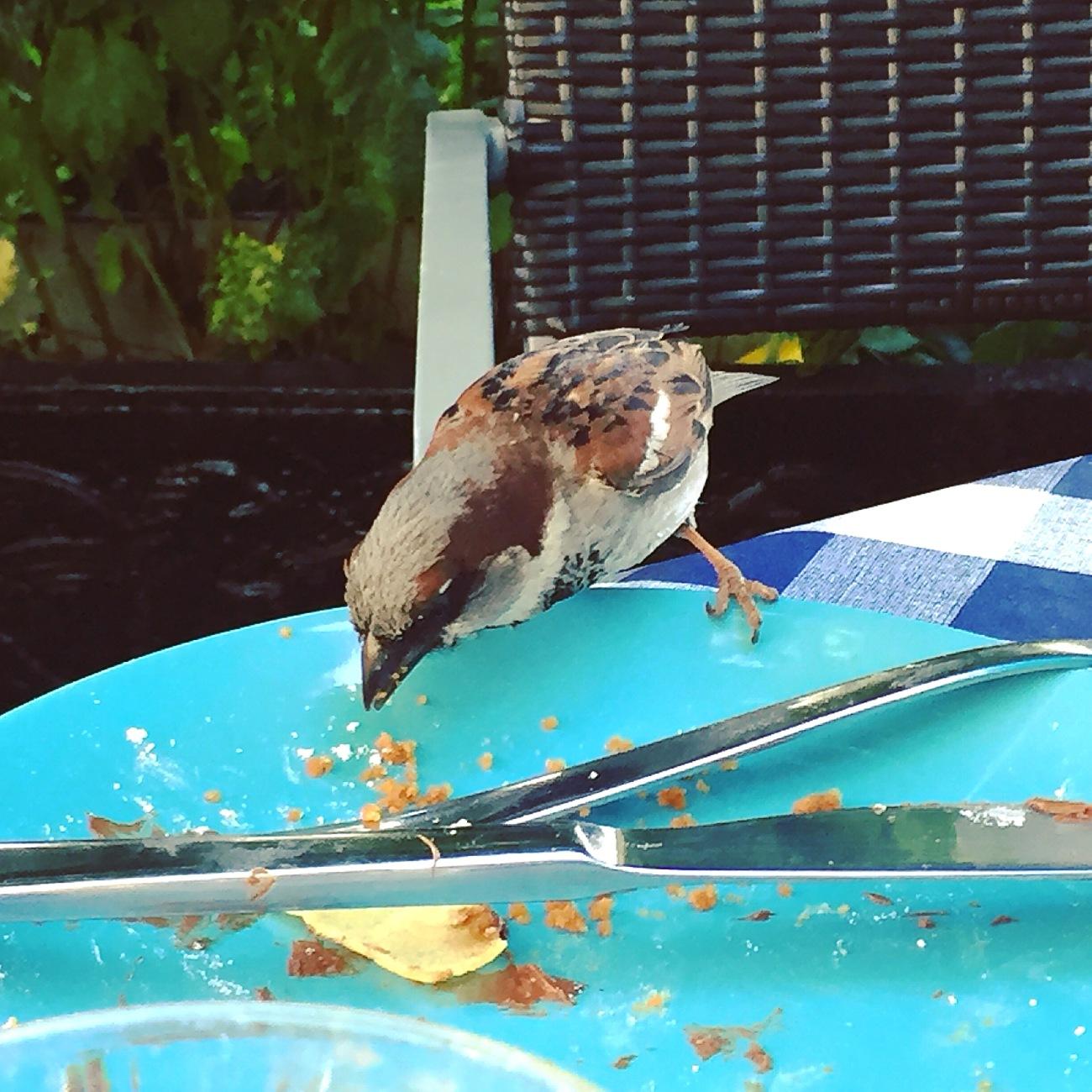le-marina-birds