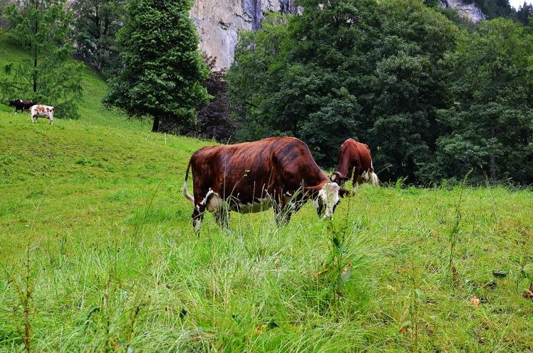 lauterbrunnen-green