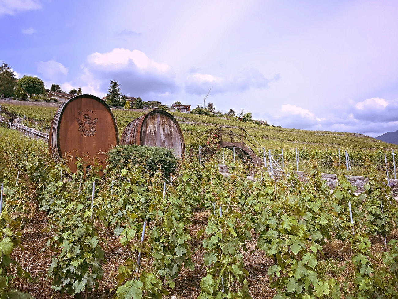 corseaux-vineyards