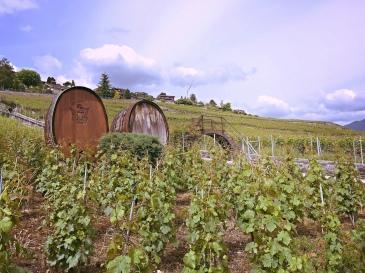 corseaux-vineyards