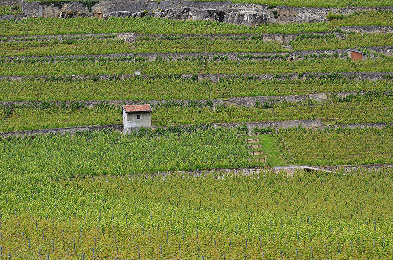terraced-vineyards
