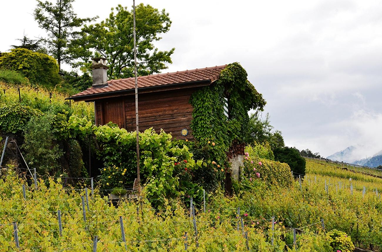vineyard-corseaux