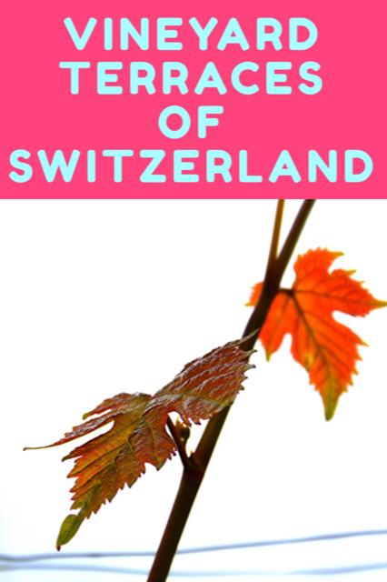 Vineyard Terraces of Switzerland - a UNESCO World Heritage Site