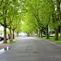 Lausanne Marina Walk