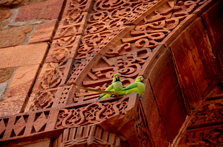 Parrots and History