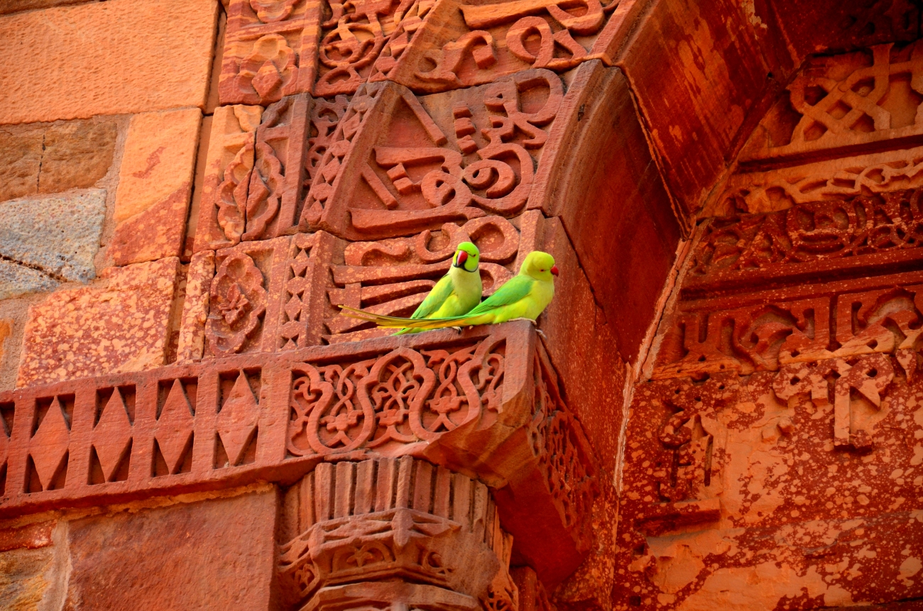 Parrots at The Qutub Minar