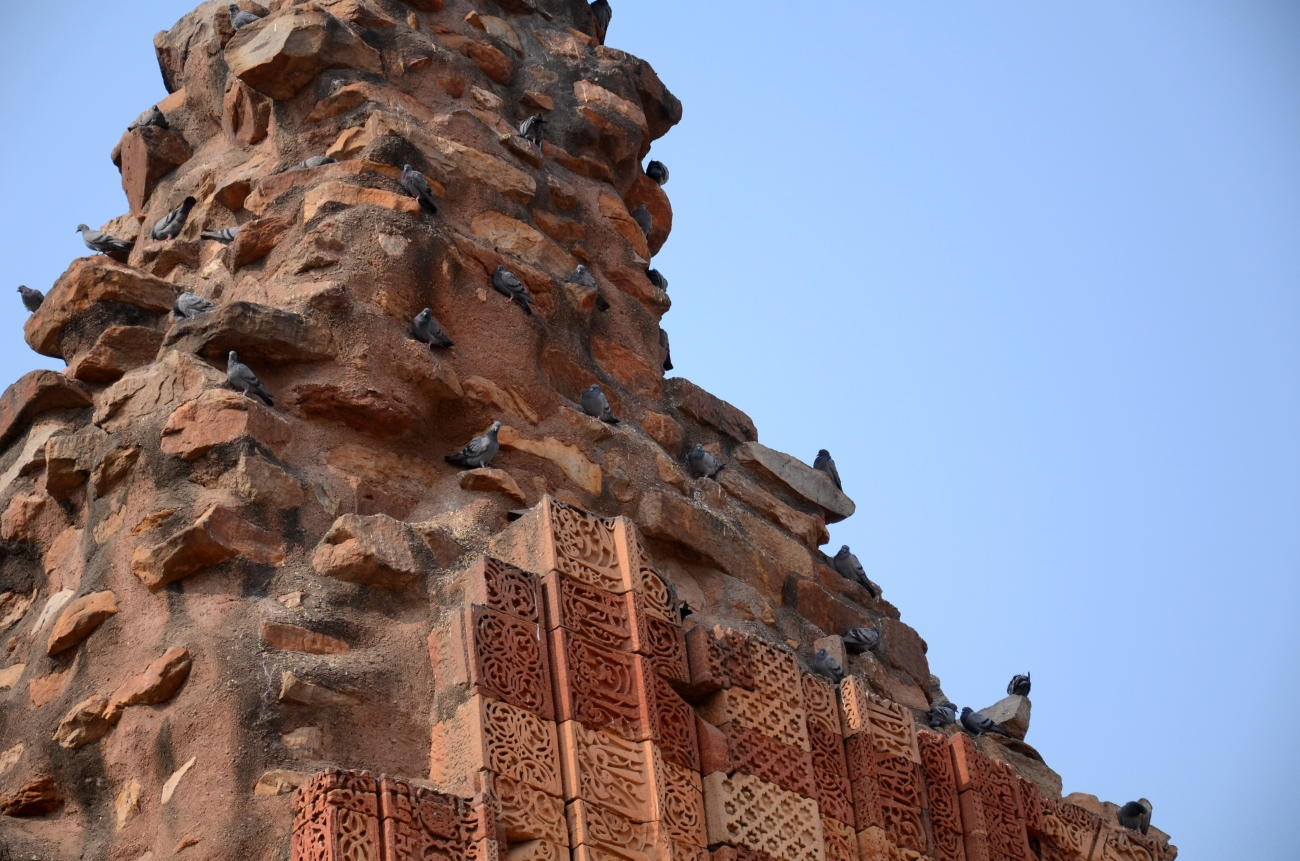 The Local Residents - Qutub Minar