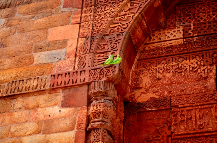 The Qutub Minar Complex - Parrots on the Wall