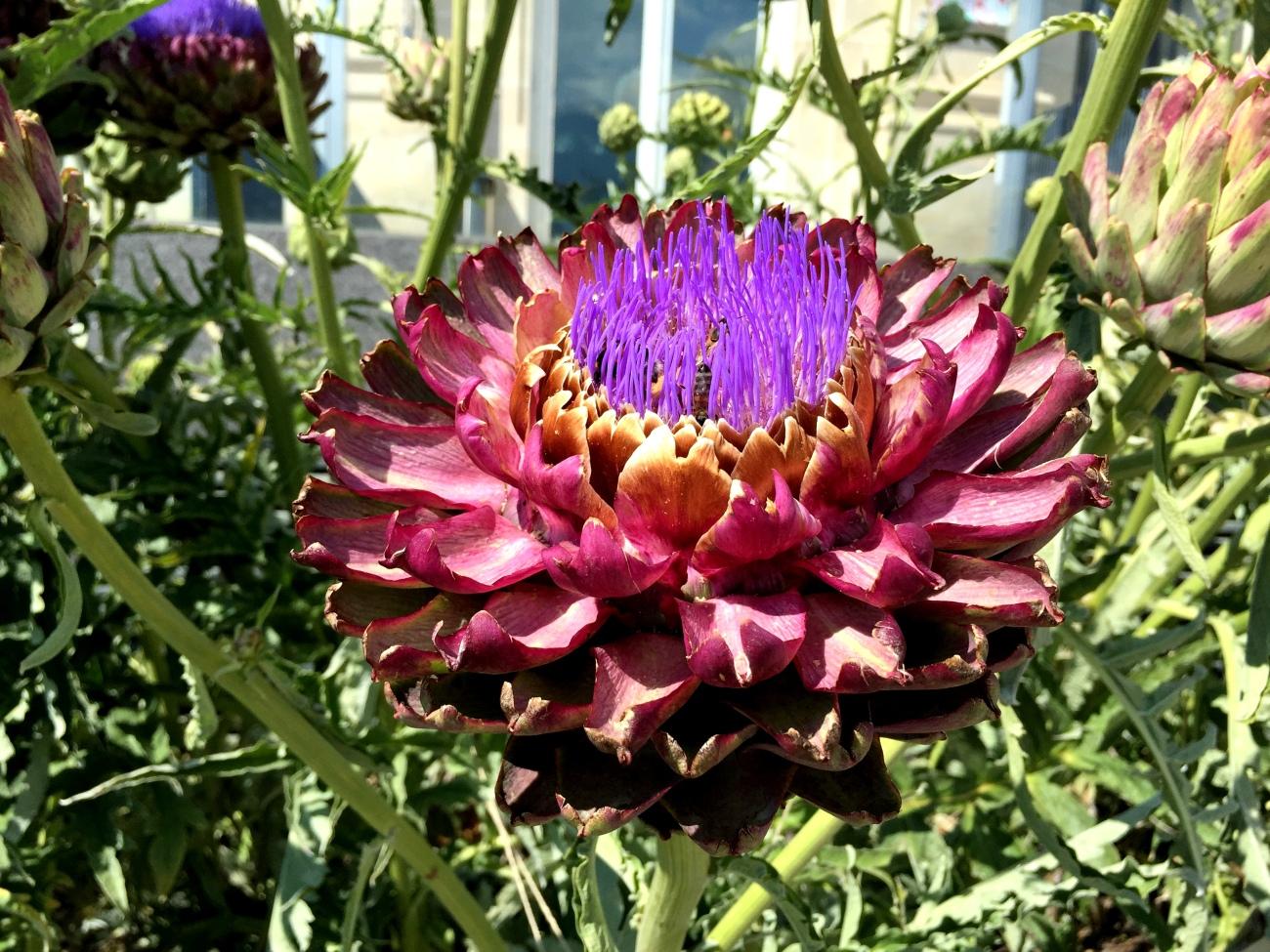 Alimentarium - Flower