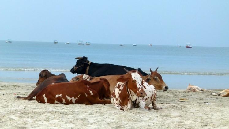 Beach - Goa - Sudha G