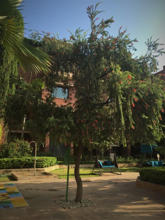 An Oasis of Calm and Green - ITC Raputana