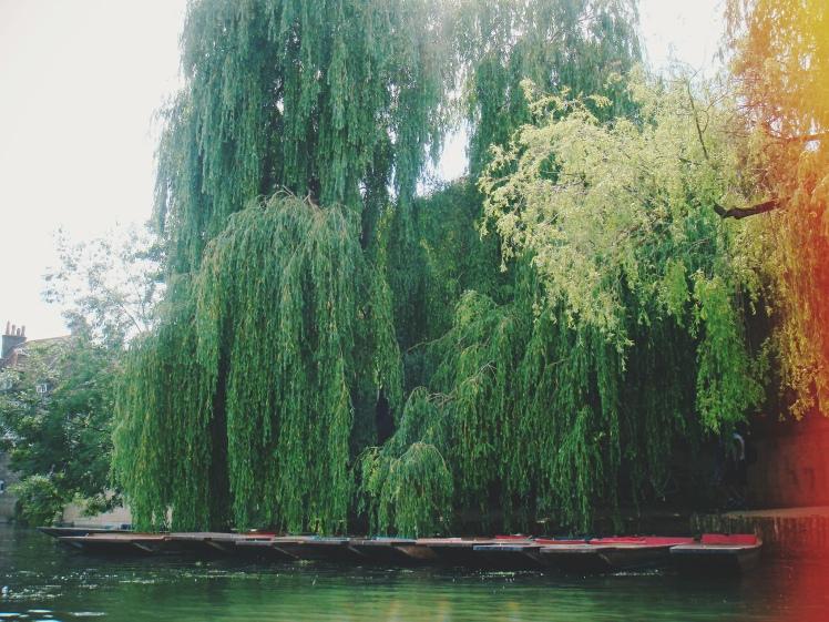 Cambridge Green