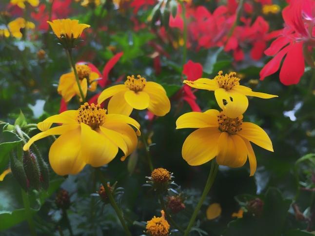 Flowersin Bloom - Montreux