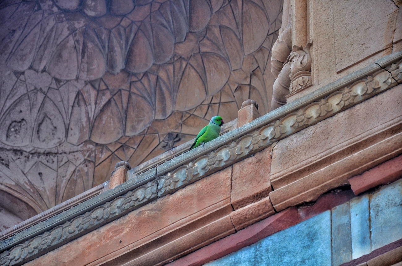 Home to Many - Safdarjung's Tomb