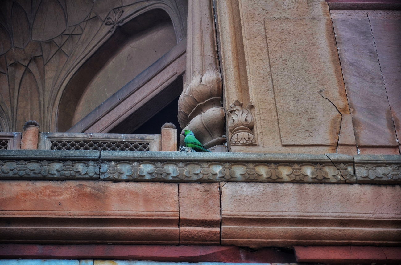 Local Residents - Safdarjung's Tomb