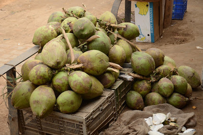Coconuts - For coconut water