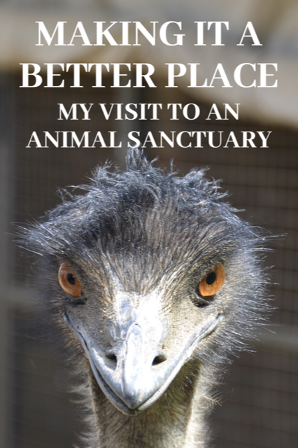 Making It A Batter Place - My Visit To An Animal Sanctuary