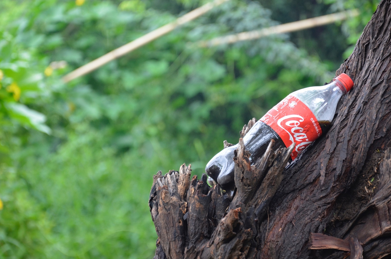 A coke bottle on a tree