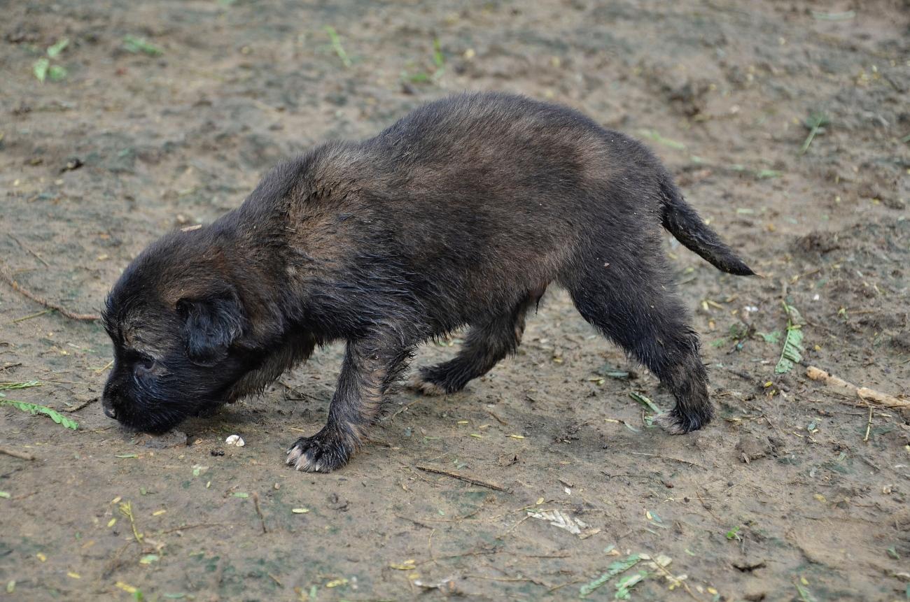 a tiny pup