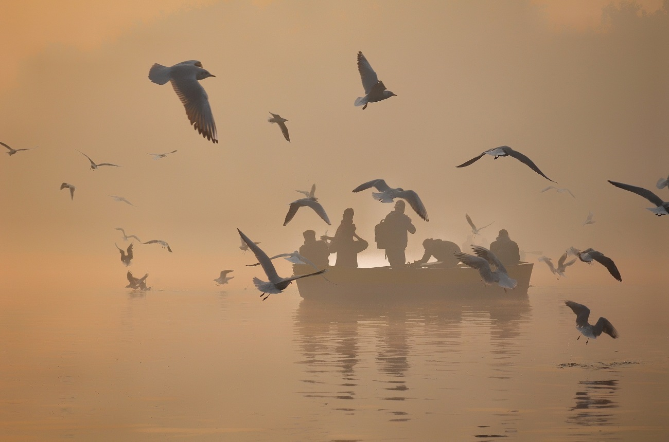 Migratory Seaguls at the Yamuna
