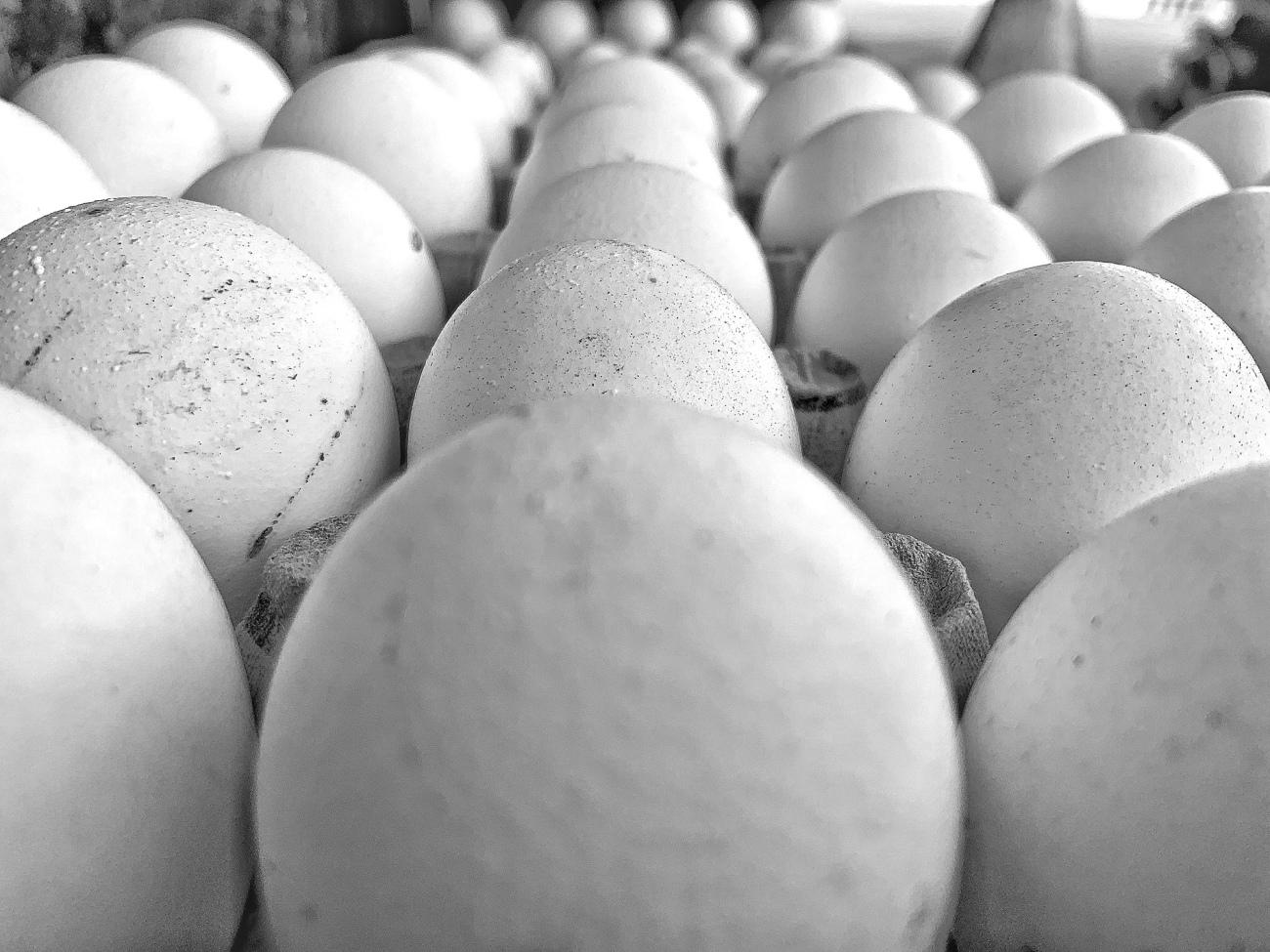 Eggs - Lodi Art District.JPG