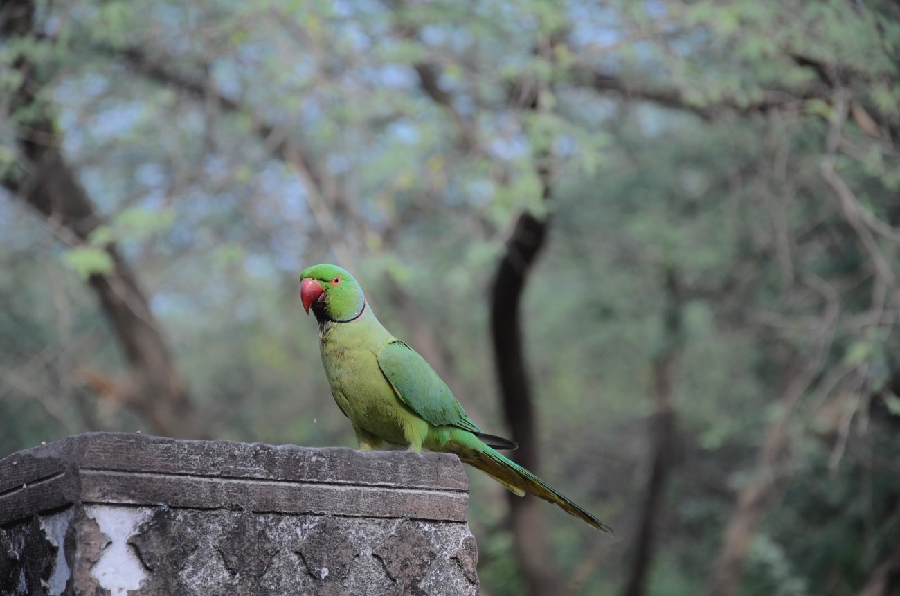 One of Delhi's Many Inhabitants