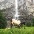 Staubbach Fall, Lauterbrunnen, Switzerland