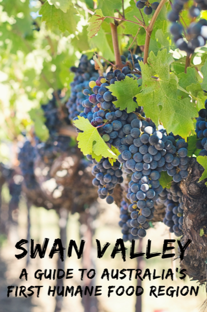 Swan Valley - Australia #Travel #Australia #Perth #Wine