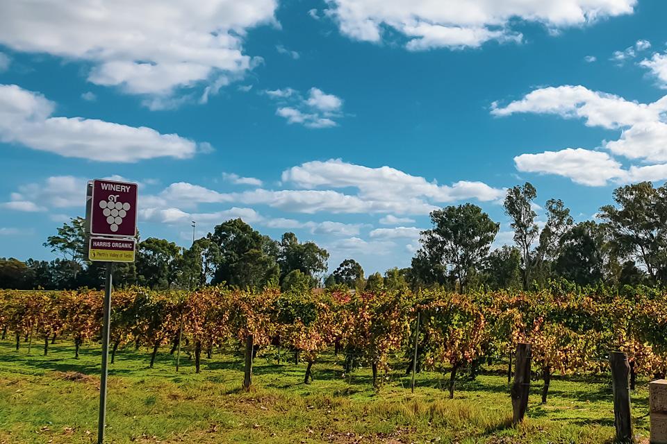 Swan-Valley-Vineyards-2