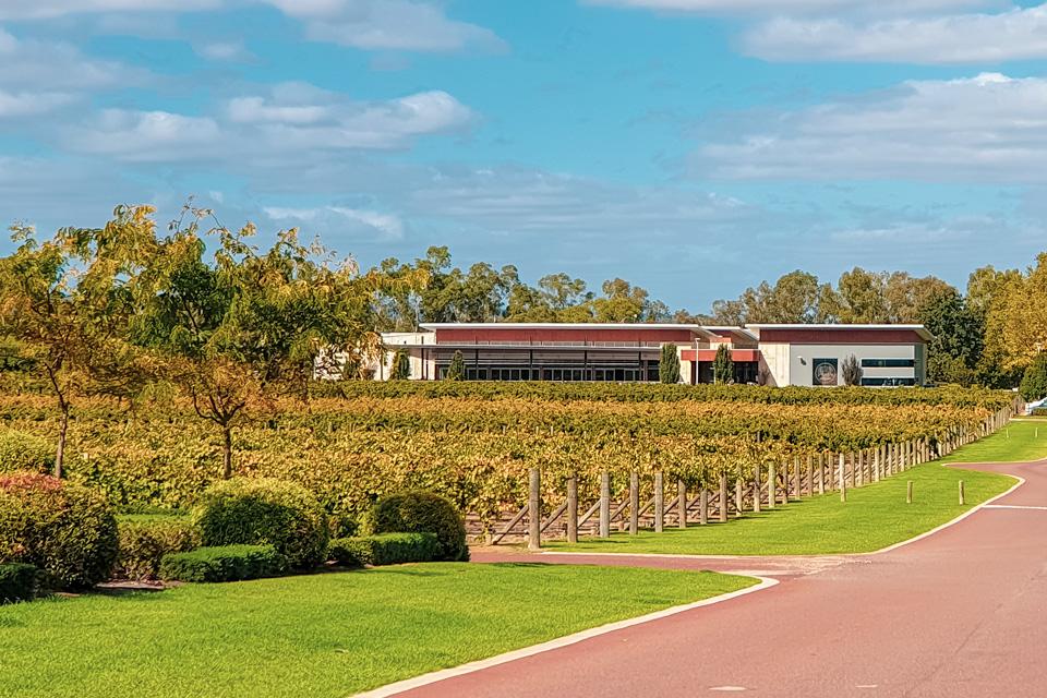 Swan-Valley-vineyards