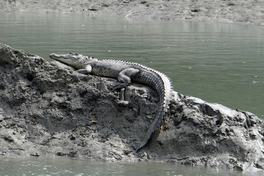Basking in the Sun - Croc!