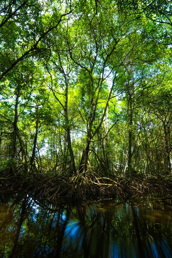 Mangroves, Pondicherry