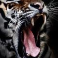 The Myth of the Tiger – Sightings at Corbett National park, India #Travel #Tiger #NationalPark