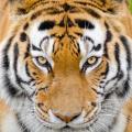 The Myth of the Tiger – Sightings at Corbett National Park #Travel #India #Corbett